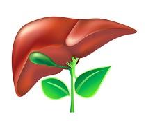 Rozpuštění žlučníkového bahna účinnými látkami z bylin